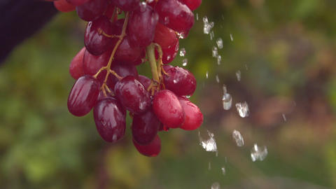 Bunch of red grapes watered in slow motion Footage