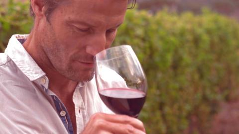 Handsome man tasting wine Live Action