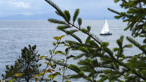 Ocean Shore - Forest Tree & Passing Sailboat stock footage
