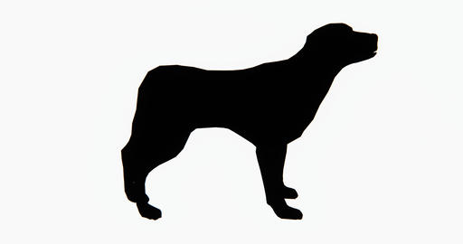 4k Dog,3d Cartoon,lovely Pet,animal Silhouette stock footage