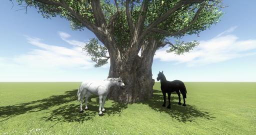 4k white horse & black horse under big tree,foal pet,farm animal wild life Live Action