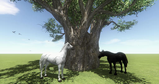4k white horse & black horse under big tree,butterfly & bird flying,foal Live Action