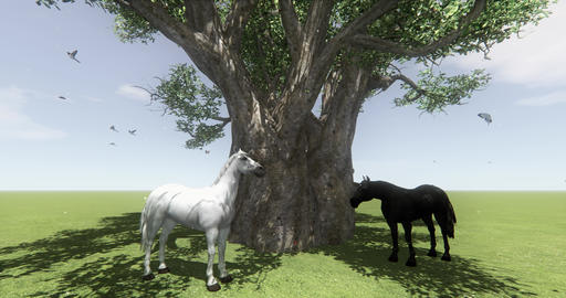 4k white horse & black horse under big tree,butterfly & bird flying,Dand Live Action
