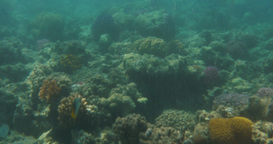 Underwater scene with coral reef and fish Footage