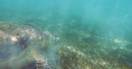 Crawling Turtle Footage