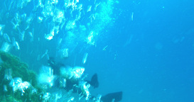Aqualunger with camera swimming undersea Footage