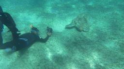 Diver and Big Sea Turtle Footage