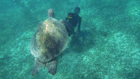 Diver Shooting a Big Sea Turtle Footage