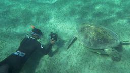 Shooting sea turtle underwater Footage
