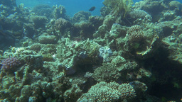 Underwater scenic view of fishes on coral reef Footage