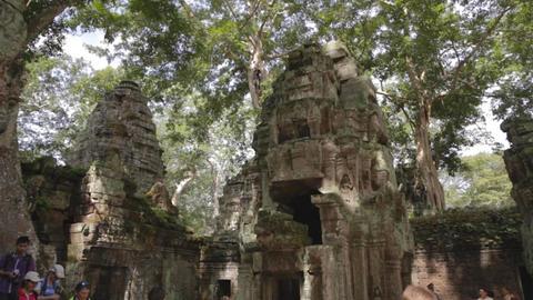diverse tourist group at ta prohm temple Footage