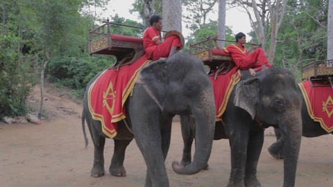 Elephant rides at Phnom Bakheng viewpoint Live Action