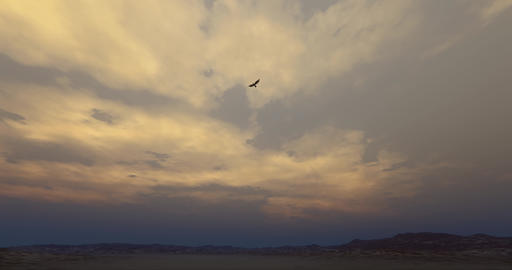4k Eagle hovering in the wilderness at dusk Footage
