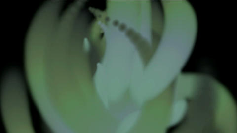 Blooming... Stock Video Footage