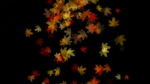group of golden maple leafs flying.pattern,symbol,idea,creativity,creative,vj,beautiful,art,decorati Animation