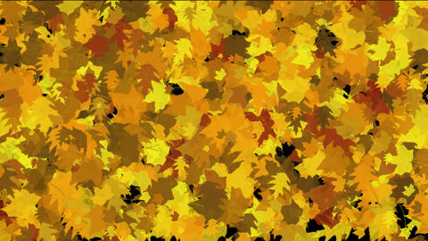 gold maple leaves dance... Stock Video Footage