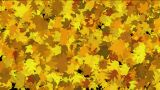Gold Maple Leaves Dance Background.life,lush,growth,seasons,autumn,harvest,hope,warmth,memories,midd stock footage