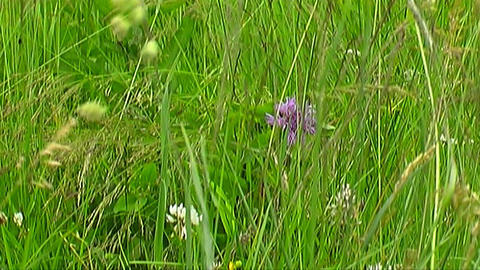 Meadow Stock Video Footage