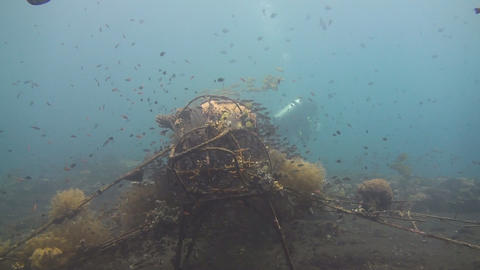 Artificial reef Stock Video Footage