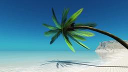 椰子の木 Animation