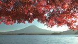 Mt.Fuji and Autumnal leaves in Kawaguchi Lake,Yamanashi,Japan Footage