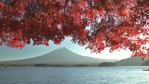Mt.Fuji and Autumnal leaves in Kawaguchi... Stock Video Footage