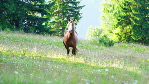 Horse Grazing in a Meadow Footage