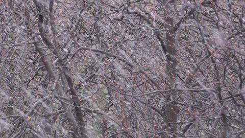 Spring Snow Falling stock footage