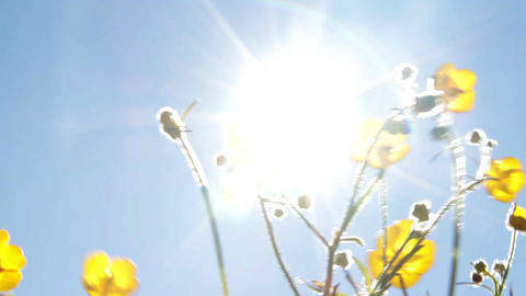 Summer flowers and sun Footage