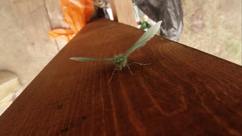 Green butterfly on a wooden post top view close-up Footage