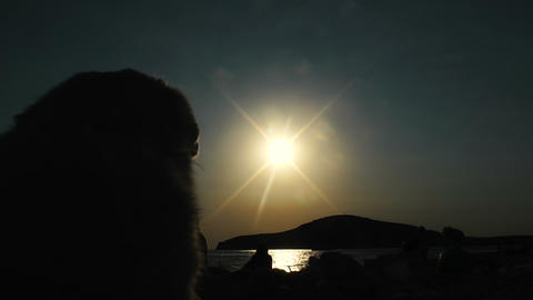 dog's and children silhuette in front of the sun in a beach Footage