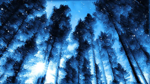 Abstract Winter Forest stock footage