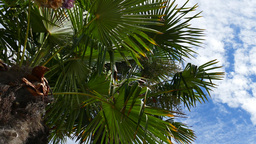 Palm Trees - 02 stock footage