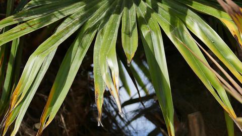 Palm Tree Leaves - Close - 4K stock footage