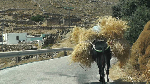 traditional transport of hay with a donkey in Greek island Footage