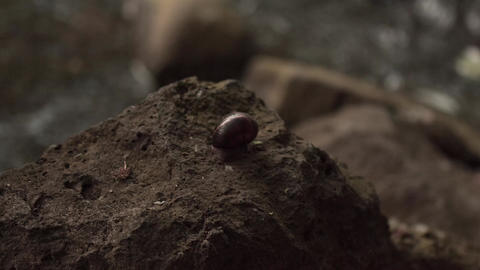 Snail On A Rock Close Up stock footage