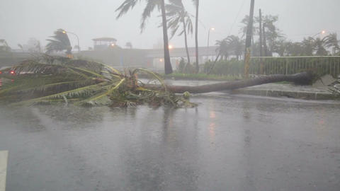 Debri And Fallen Trees In Typhoon Souledor, Taiwan, August 2015 stock footage