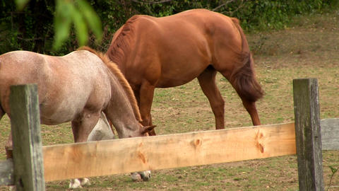 Horses grazing at farmers ranch Footage