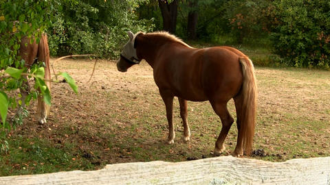 Horses 2 Footage