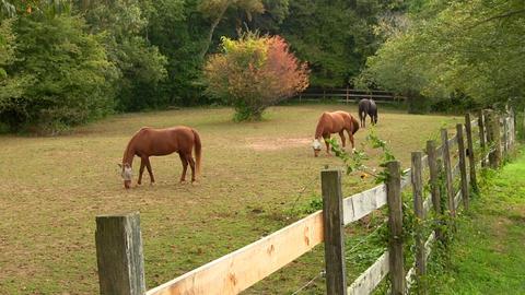 Horses 4 Footage