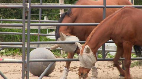 Horse flirt 5 Footage