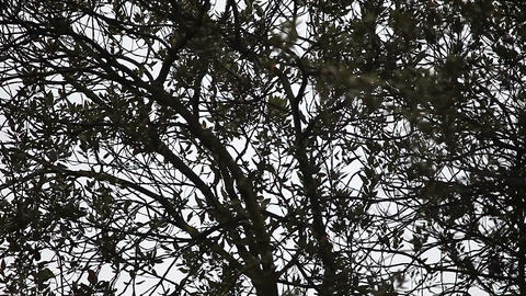 trees on overcast day Footage