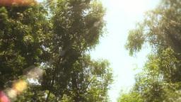 Enchanted Eerie Trees 10 Animation