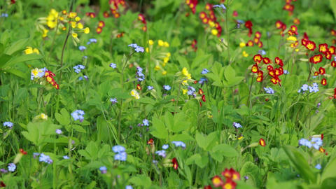 Wild flowerbed with a bee flying around Footage