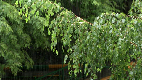 Summer Rain And Green Line stock footage