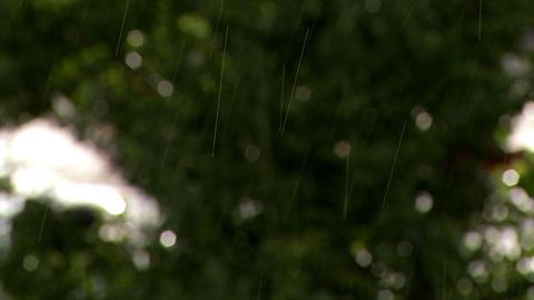 Rain Tree Change Focus stock footage