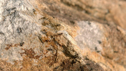 Close up view of insects on rock Footage