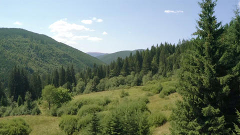 Coniferous Forest on the Hills. Aerial Video Footage