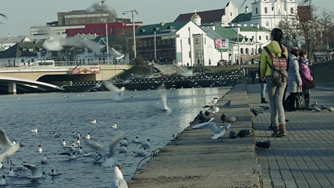 Feeding Seagulls stock footage