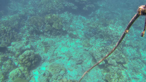 Undersea loose rope rising towards the surface Stock Video Footage